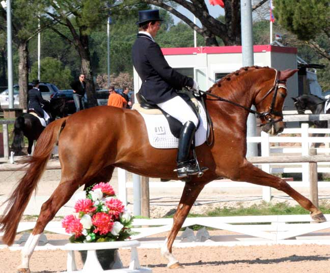 Woodlander Horses Shine at The Spring Tour!