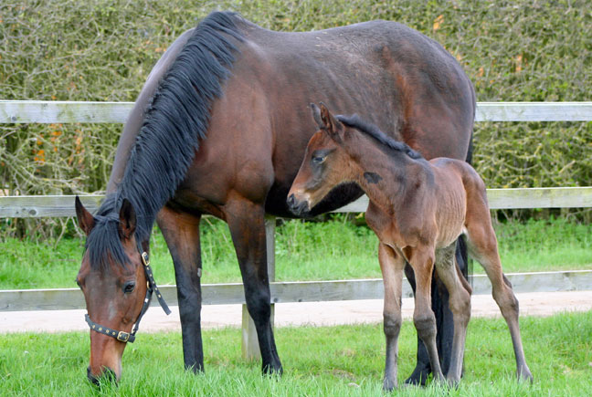 A new foal arrives!