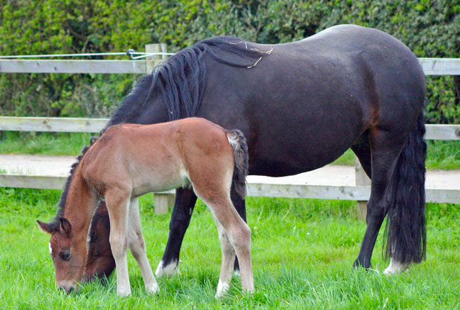 More foals and Lynne's latest blog